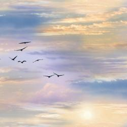 Birds on Colorful Sky with Sun Fabric